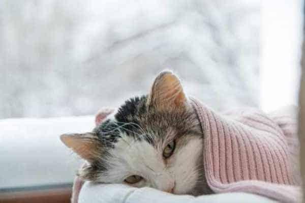 Ciri Ciri Kucing Sakit Perut dan Cara Mengobatinya