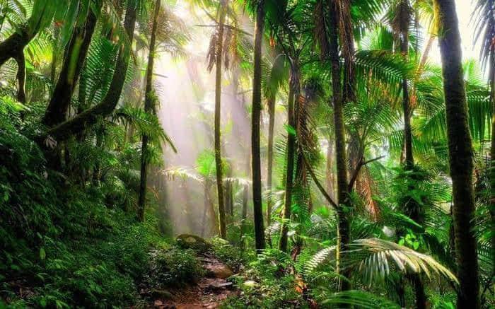 Perbedaan Iklim Tropis dan Subtropis
